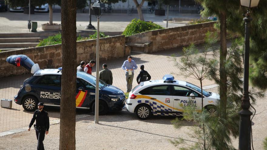 Muere una mujer en Palma al caerle encima una palmera
