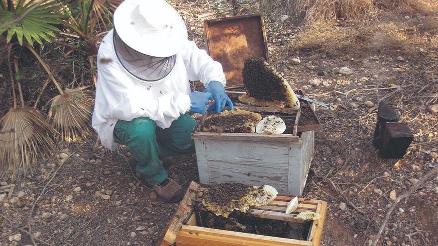 El Gobierno de Canarias destina 539.000 euros a los productores de miel de abeja negra