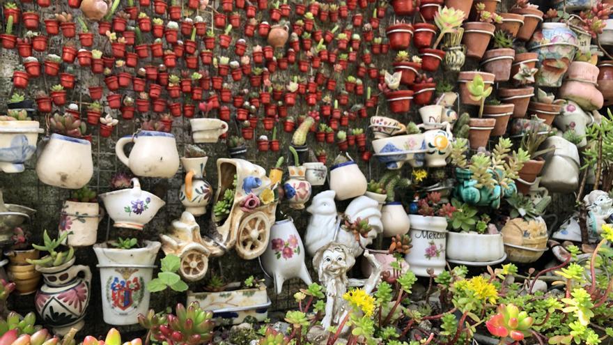 Los 7.000 cactus de Hervás