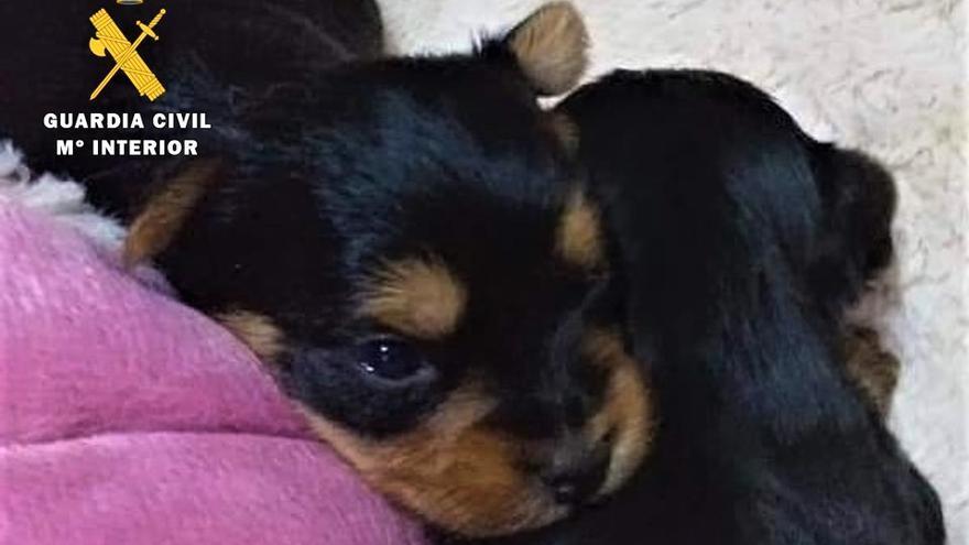 La Guardia Civil esclarece 6 estafas on line en la venta de mascotas