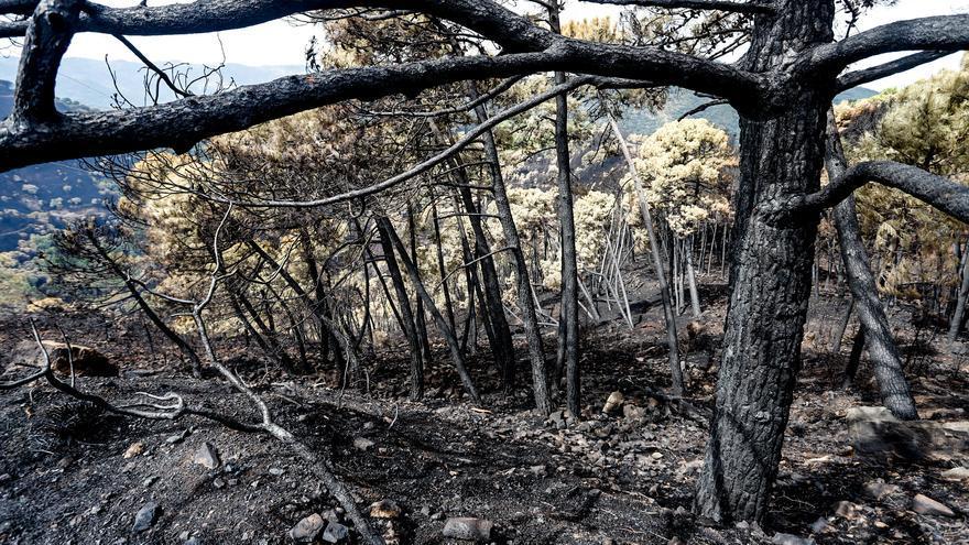La Junta materializará el martes en consejo de gobierno la solicitud de zona catastrófica para Sierra Bermeja