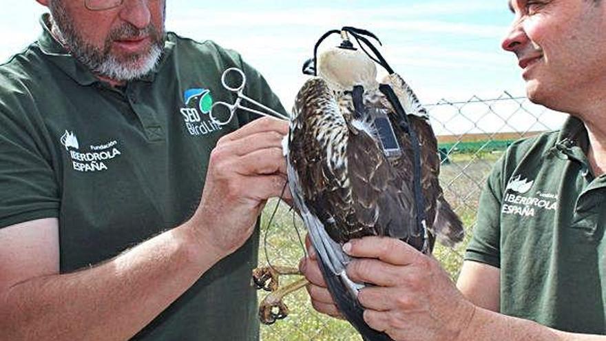 Ornitología de gran vuelo en Zamora