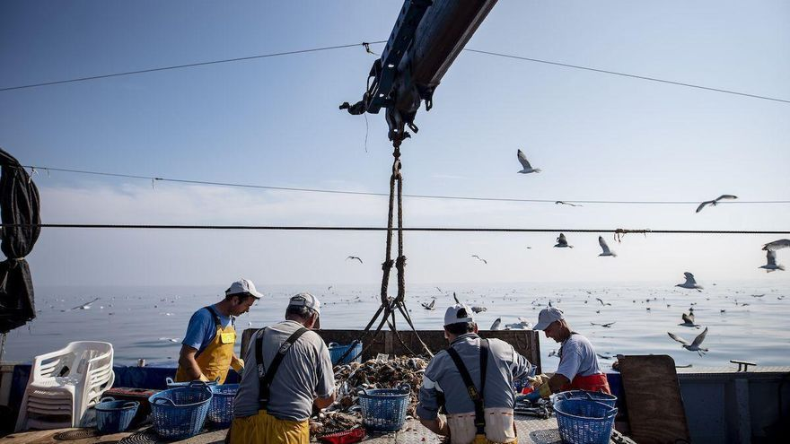 Las lonjas de Castellón capturaron 7.866 toneladas de Peix de Llotja en 2019