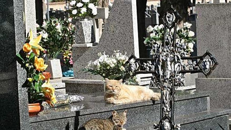 El Ayuntamiento de Zamora captura la colonia felina del cementerio para garantizar la salubridad