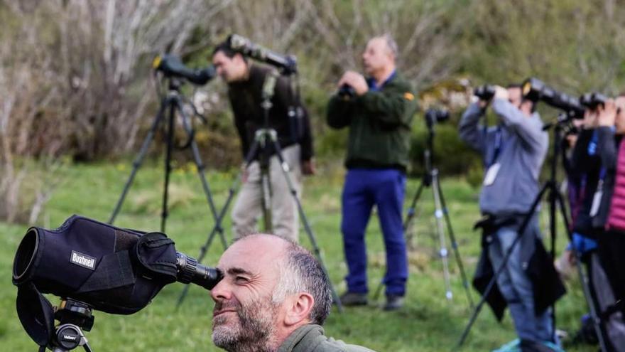 Ver un oso en Asturias: garantía casi al 100% con la nueva regulación