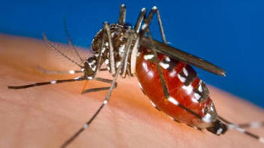 Què és i com es transmet el dengue?