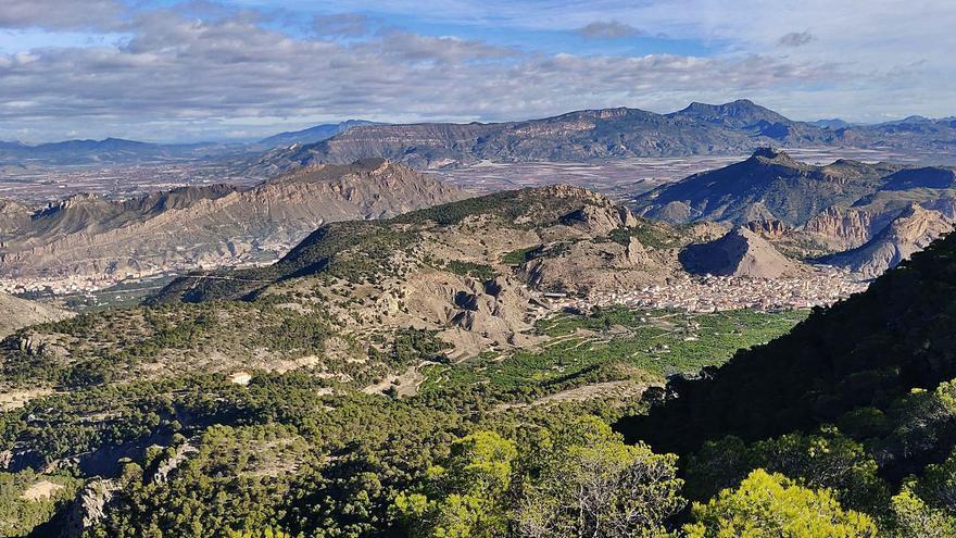 El abandono del campo pasa factura al Valle de Ricote