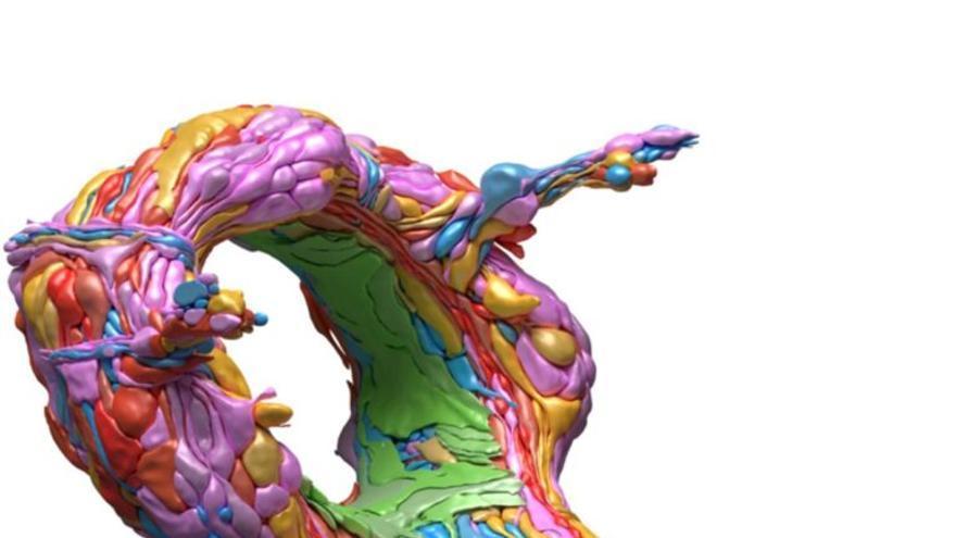 Un pequeño gusano desvela cómo es el desarrollo del cerebro humano: sigue patrones sinápticos que aseguran el procesamiento de la información