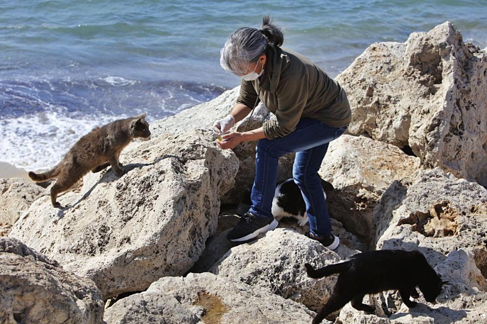 Die Katzen an Palmas Stadtstrand fristen ein trauriges Dasein.