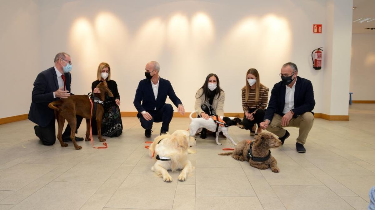 La Fundación Jove amplía el programa de terapia para menores víctimas de violencia machista con perros