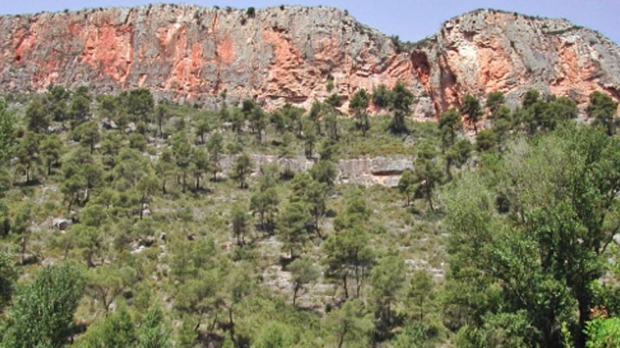 Emergencia Climática reduce el exceso de pino blanco en zonas con fuegos reiterados