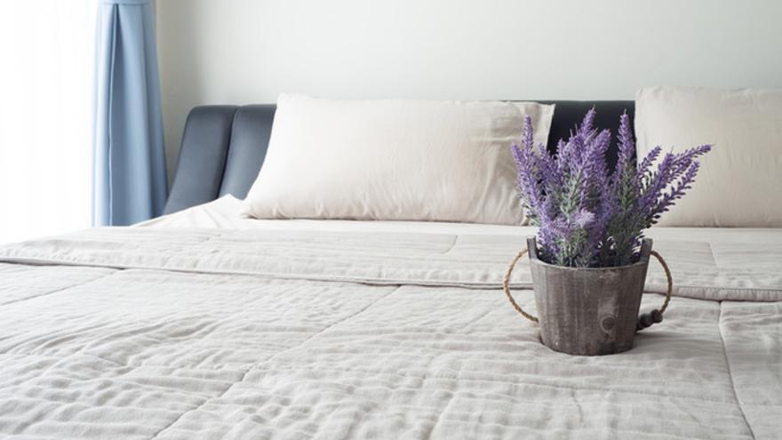 Las plantas de interior más fáciles de cuidar y que más te van a alegrar el hogar