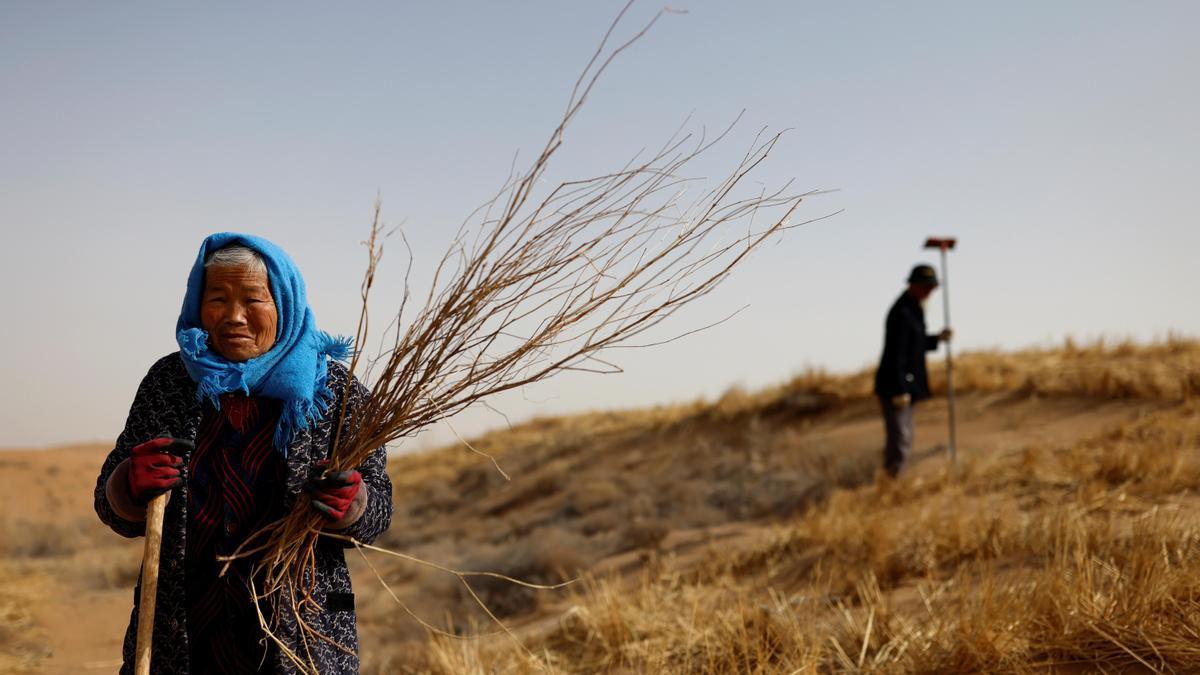 Una granjera sostiene un cultivo en una explotación agrícola de China