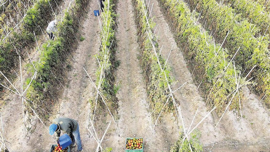Així impactarà el canvi climàtic en els cultius i la ramaderia d'Espanya