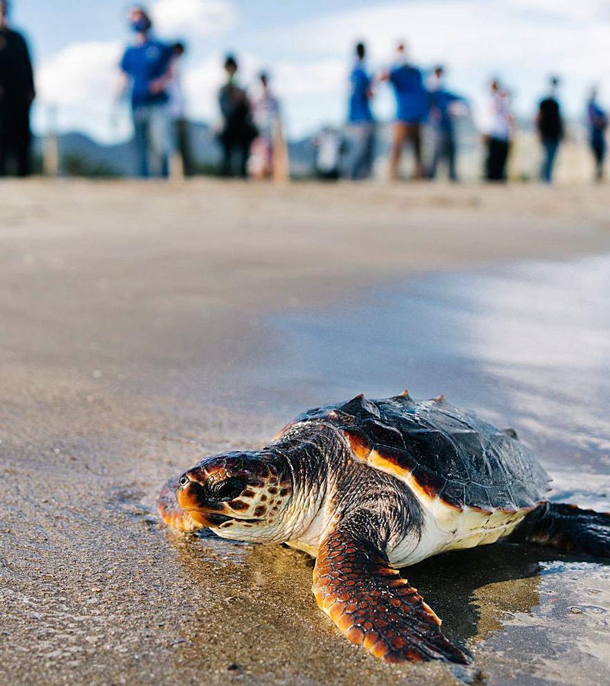 Escola de tortugues