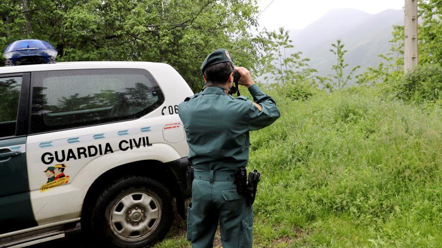 Hallan el cadáver de un oso pardo joven en Asturias
