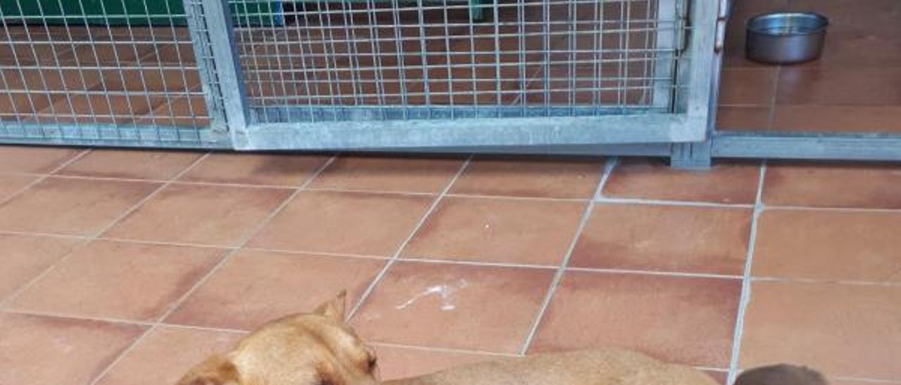 Una perra amamanta a cachorros en el albergue. | LEVANTE-EMV