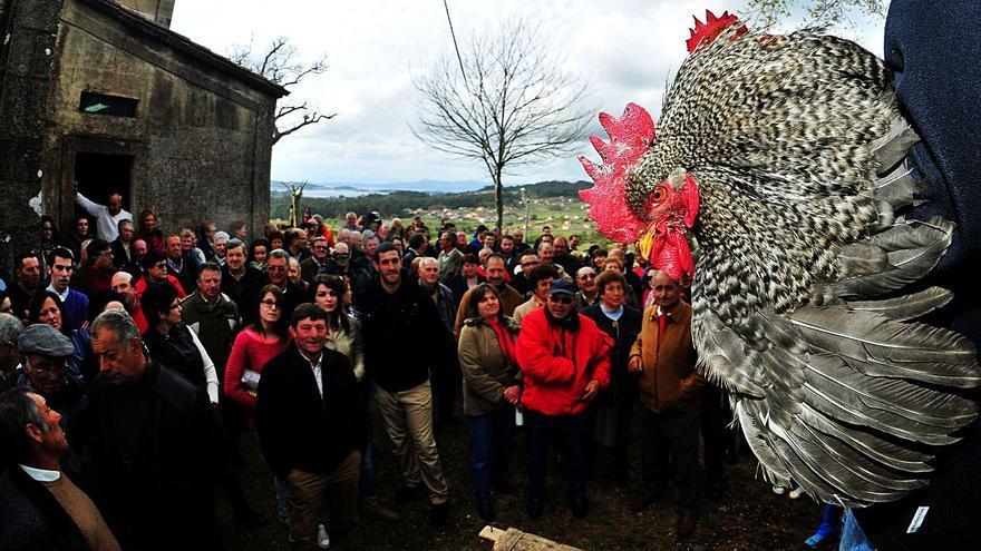 Siete municipios de O Salnés están en alto riesgo de un eventual brote de gripe aviar