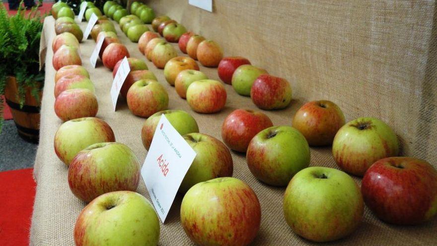 Villaviciosa celebra hoy los actos por el Día Internacional de la Manzana