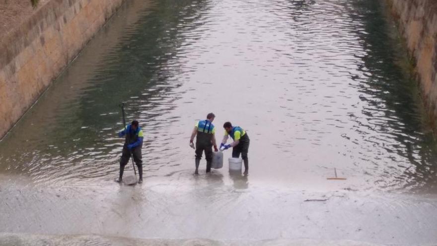El GOB critica la utilización de fitosanitarios en el agua del torrente de Sa Riera