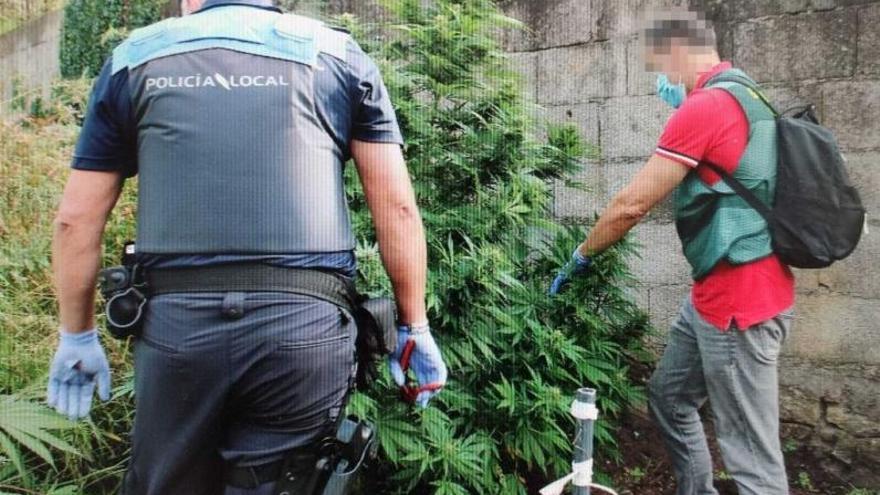 La plantación de marihuana desmantelada acaba con un vecino de Domaio detenido