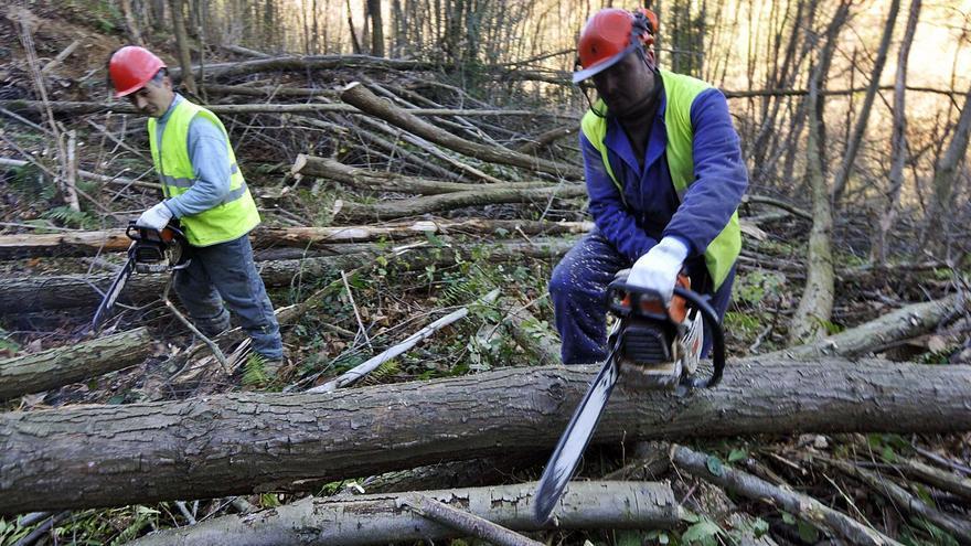Madereros y sindicatos rechazan el modelo eléctrico que arrincona a la biomasa