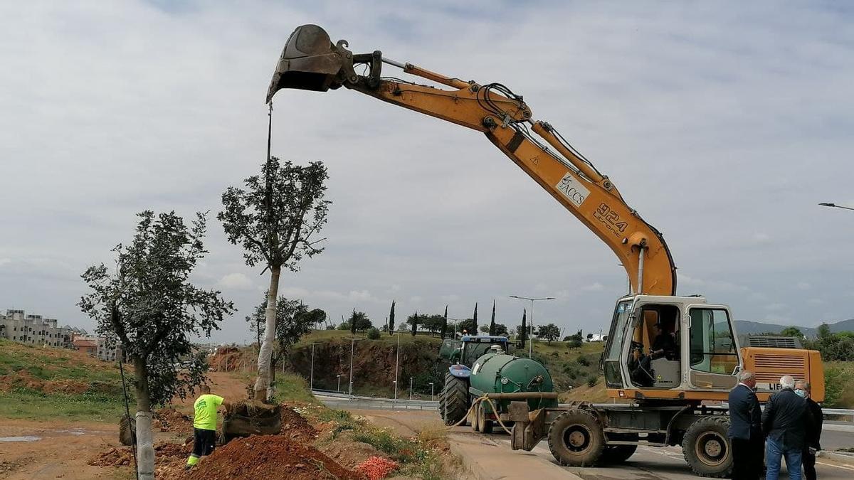 Urbanismo ha iniciado la plantación de 22 árboles en el entorno del tramo municipal de la Ronda Norte.