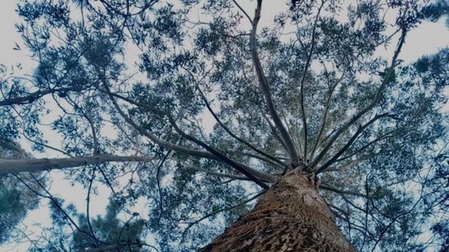 Cinco formas de las que la madera contribuirá a la recuperación verde en Europa