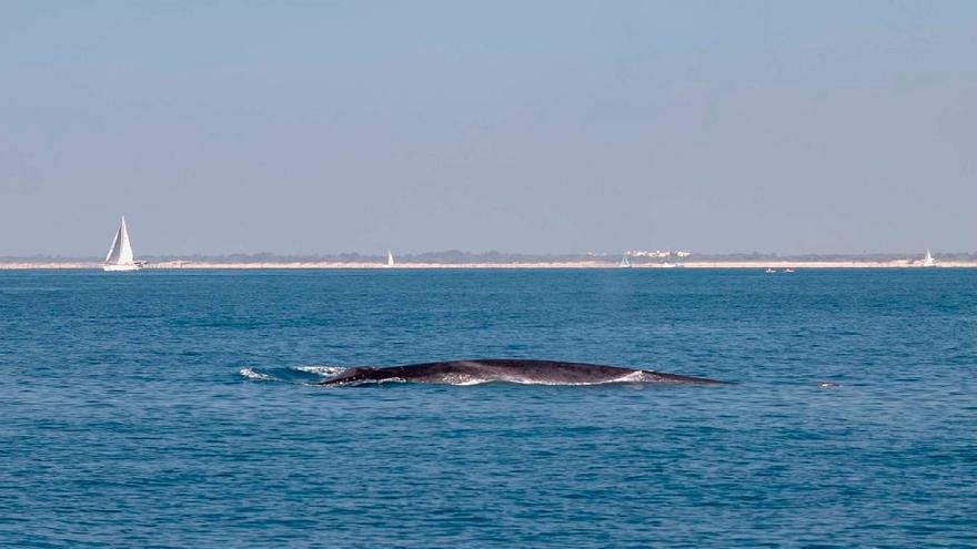 Avistan una ballena en aguas del puerto de València y de Pinedo