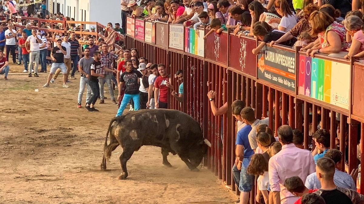 Uno de los festejos taurinos celebrados en Rincón del Obispo en un año anterior
