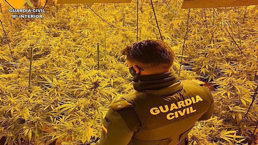 Dejan en libertad a dos arrestados en Cox con 10.300 plantas de «maría»