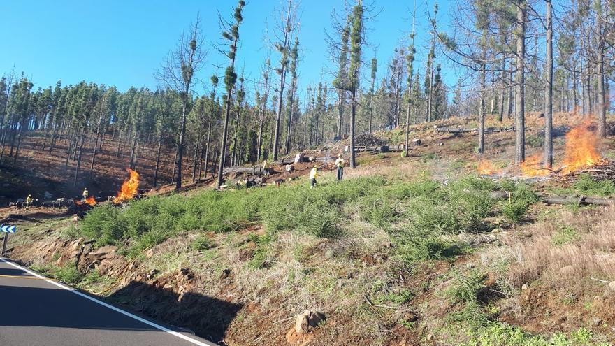 El Cabildo realiza quemas para dificultar la propagación de posibles incendios forestales