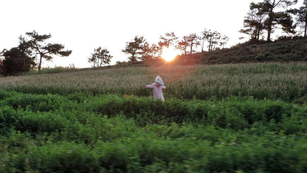 Passant pels termes de Cambrils al Solsonès, un lector va captar aquest espantaocells amb la preciosa posta de sol.
