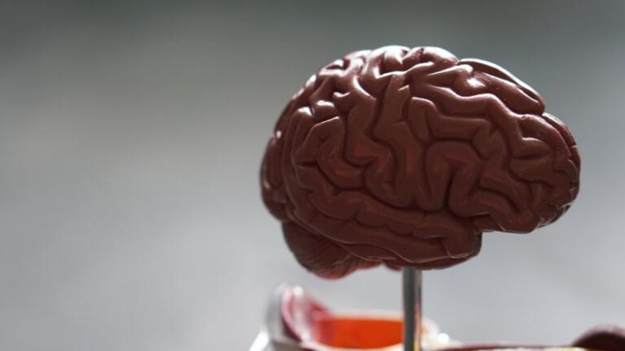 El cerebro humano es el resultado de la extinción de los grandes mamíferos