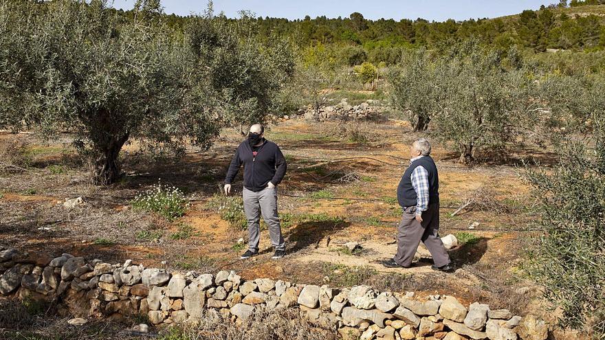 """Ofensiva """"postal"""" para agilizar la compra de suelo en Navarrés"""