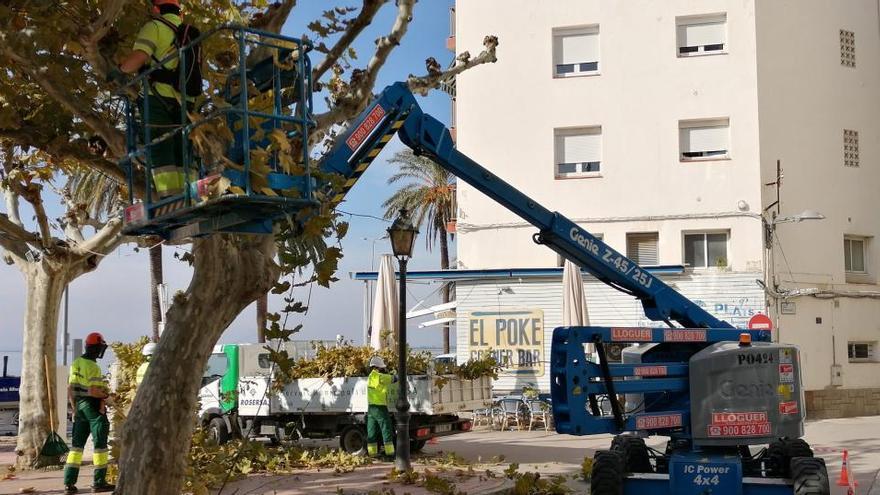 Roses comença la poda de 832 arbres per sanejar i evitar malalties
