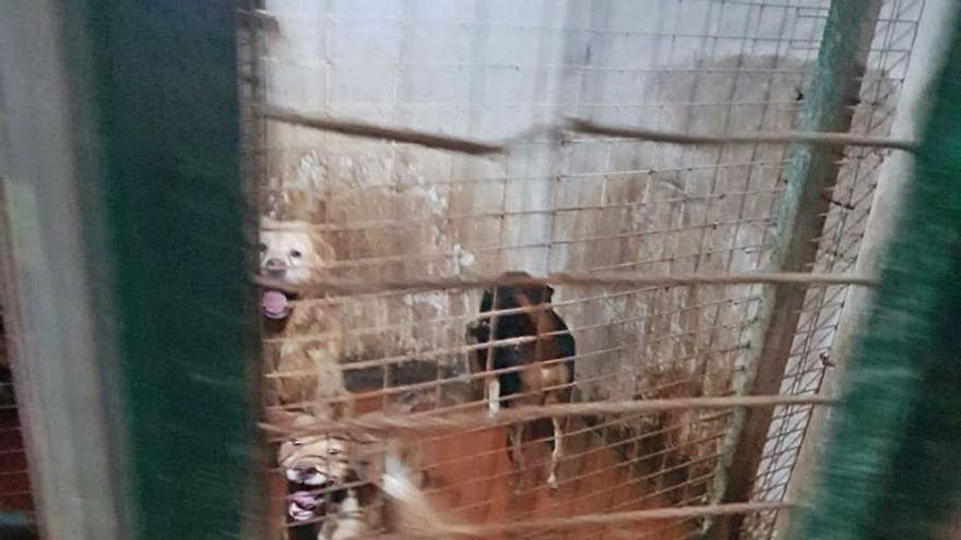 Rescatan 10 perros hacinados en un trastero sin luz ni ventilación