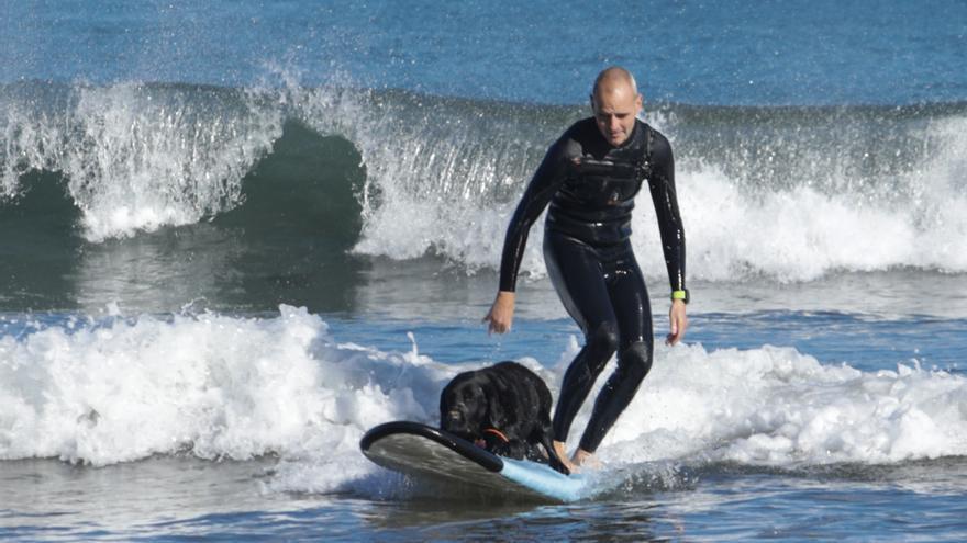 """""""Kiara"""", la perra surfera de Gijón"""