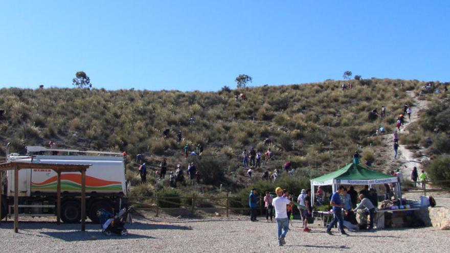 El Campello reforesta Les Puntes de Gosàlvez con 600 ejemplares