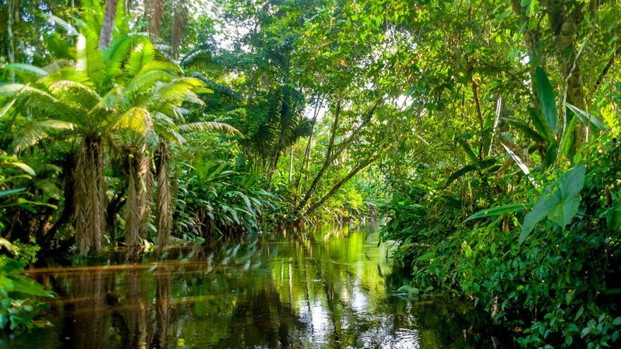 Los árboles pequeños ayudan a la supervivencia de las selvas tropicales