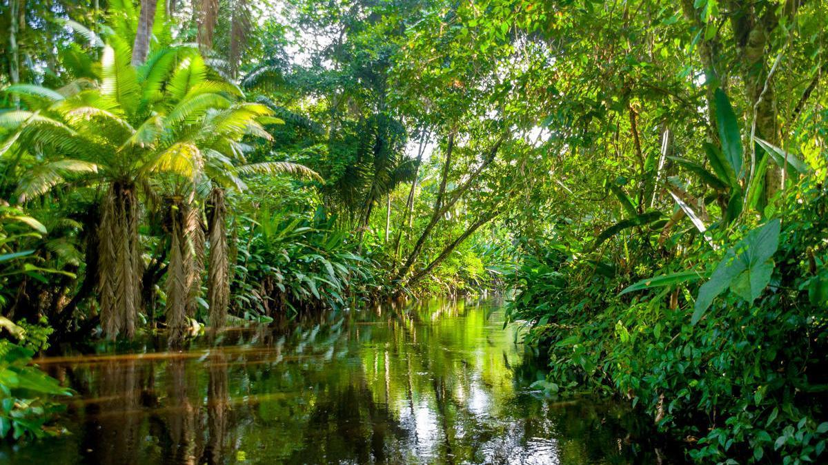 Una imagen de la selva amazónica.