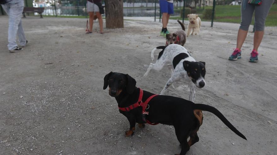 El Parque María Luisa de Carretera de Cádiz contará con un parque canino