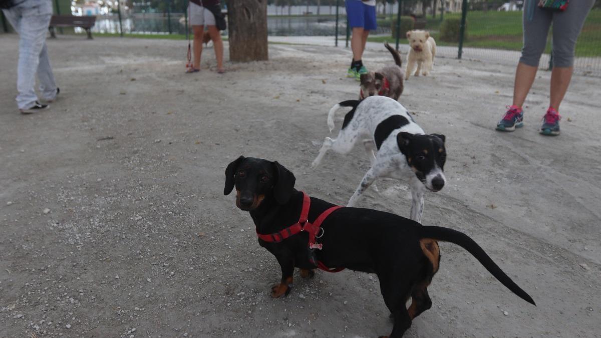 Imagen de archivo de un parque canino en Huelin.
