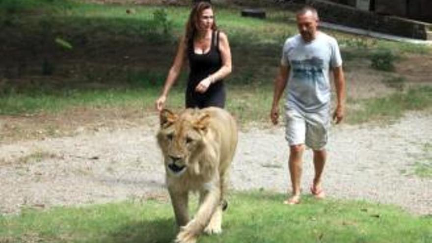 Demanen el decomís d'un lleó utilitzat per fer fotos eròtiques en una casa de la Garrotxa