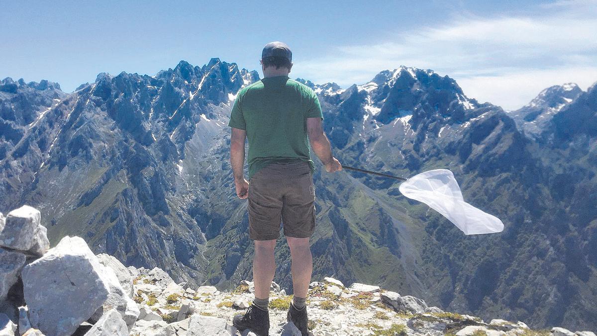 Ún de los espertos asturianos, buscando camparines en Picos.