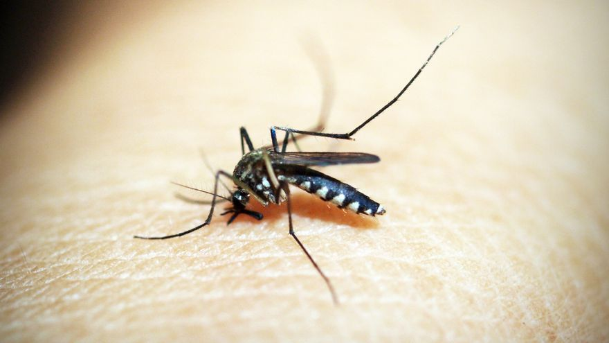 Repelente de mosquitos: los mejores remedios caseros