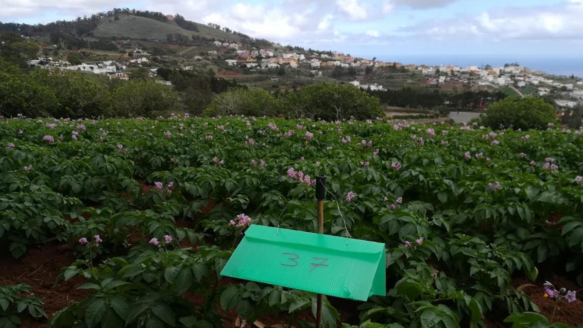 El Cabildo destina 1,9 millones a recuperar tierras para el cultivo