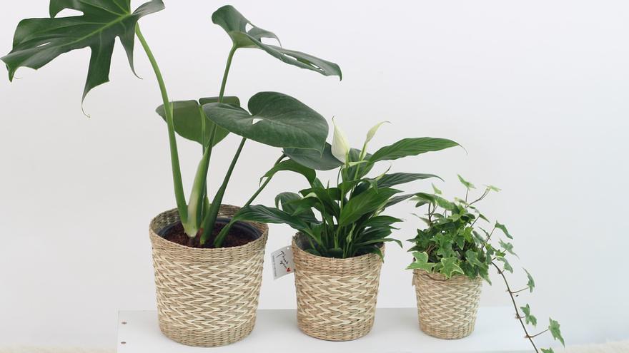 Las plantas que más tiempo duran sin regar