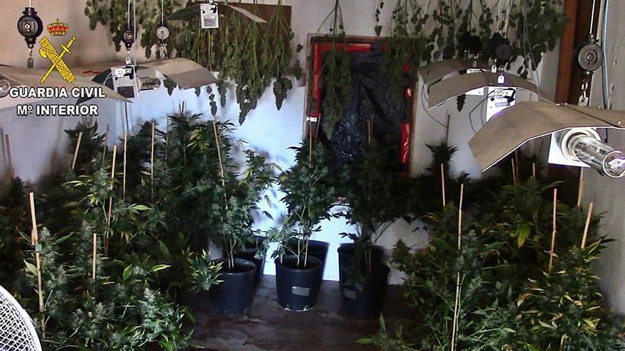Seis condenados por cultivar marihuana a gran escala en varios pueblos de Mallorca