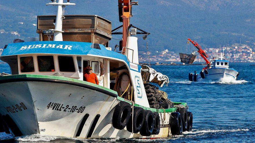 La conserveras gallegas y las depuradoras de Francia e Italia se lanzan a por el mejillón